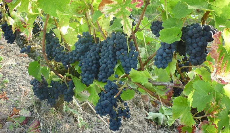 Vinople Centre Val De Loire La Transmission Des Entreprises